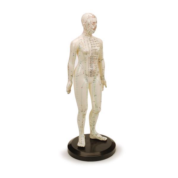 "Woman Human Model 19"""
