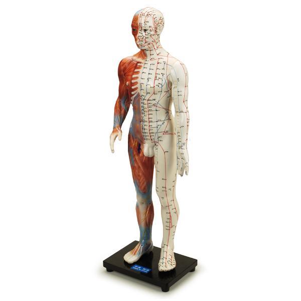"Jing-LuoTong Human Model 24"""